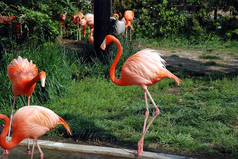 上野動物園西園 ベニイロフラミ...